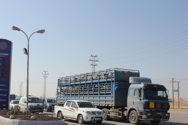 Pic 7 Goats and sheep being trucked to Saudi Arabia for sale.jpg